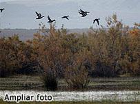 Foto de El Planerón de Belchite